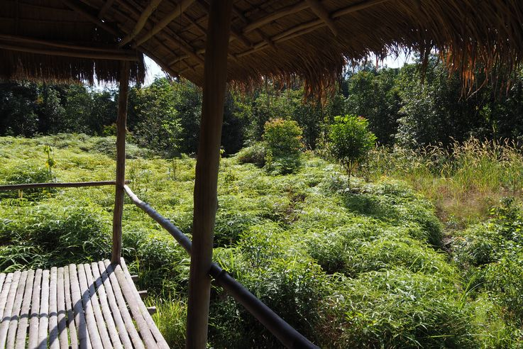 Dans la jungle de Cardamome