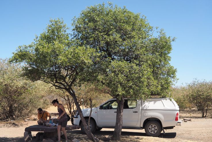 Quiver Tree Forest Camp