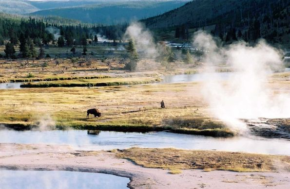 Bisons et Yellowstone river